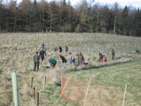 Tree planting 13th March 2011_046_1.JPG
